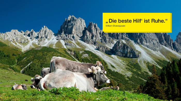Kühe auf Bergweide mit Bergen im Hintergrund © Herby Me, stock.adobe.com