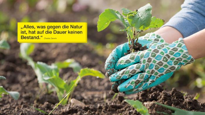 Hände mit Gartenhandschuhen mit Pflänzchen © goodmoments, stock.adobe.com